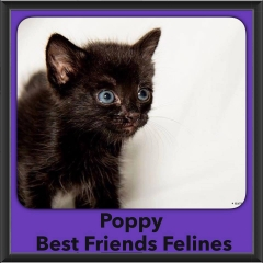 2016-Adopted-Poppy