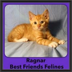 2016-Adopted-Ragnar