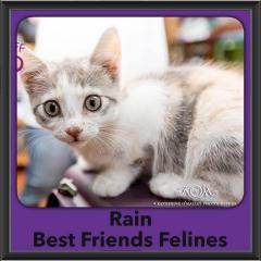 2016-Adopted-Rain