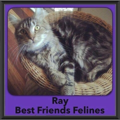 2016-Adopted-Ray