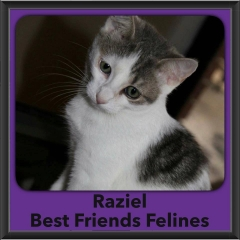 2016-Adopted-Raziel