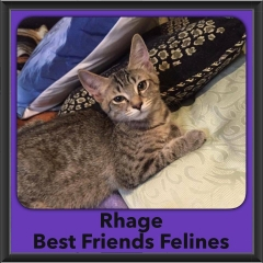 2016-Adopted-Rhage