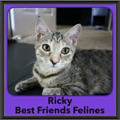 2016-Adopted-Ricky