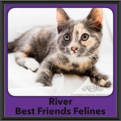 2016-Adopted-River