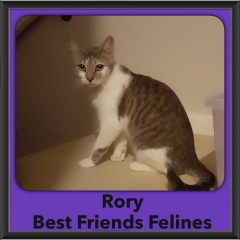 2016-Adopted-Rory