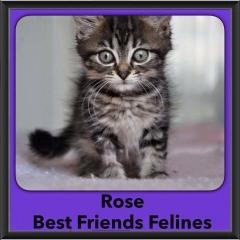 2016-Adopted-Rose