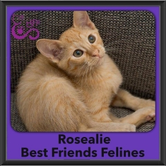 2016-Adopted-Rosealie