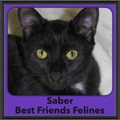 2016-Adopted-Saber
