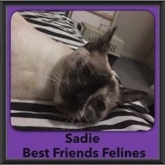 2016-Adopted-Sadie