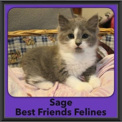 2016-Adopted-Sage