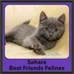 2016-Adopted-Sahara