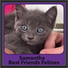 2016-Adopted-Samantha