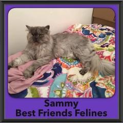2016-Adopted-Sammy