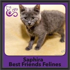 2016-Adopted-Saphira