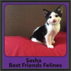2016-Adopted-Sasha