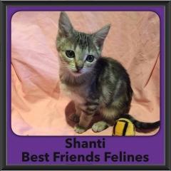 2016-Adopted-Shanti