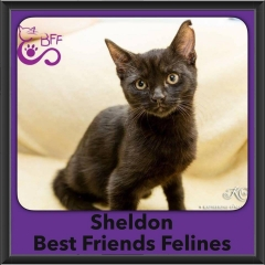 2016-Adopted-Sheldon