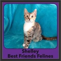 2016-Adopted-Shelley