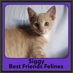 2016-Adopted-Siggy