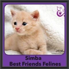2016-Adopted-Simba