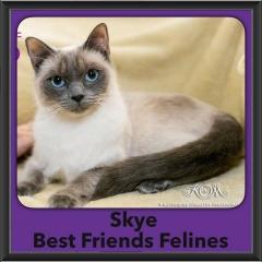 2016-Adopted-Skye