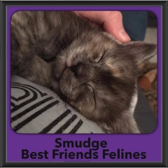 2016-Adopted-Smudge