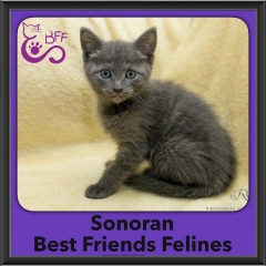 2016-Adopted-Sonoran