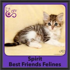 2016-Adopted-Spirit
