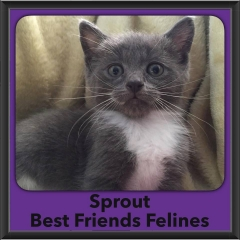 2016-Adopted-Sprout