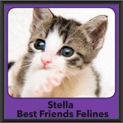 2016-Adopted-Stella
