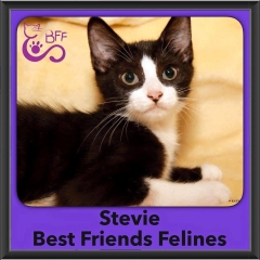 2016-Adopted-Stevie