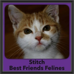 2016-Adopted-Stitch
