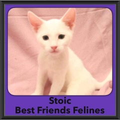 2016-Adopted-Stoic
