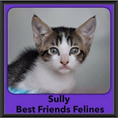 2016-Adopted-Sully