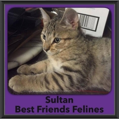 2016-Adopted-Sultan
