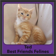 2016-Adopted-Ted