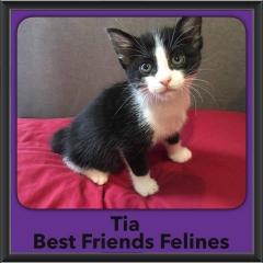 2016-Adopted-Tia