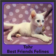 2016-Adopted-Tohr