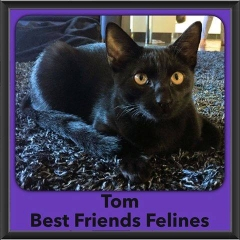 2016-Adopted-Tom