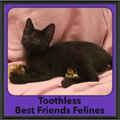 2016-Adopted-Toothless