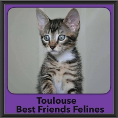 2016-Adopted-Toulouse