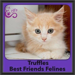 2016-Adopted-Truffles