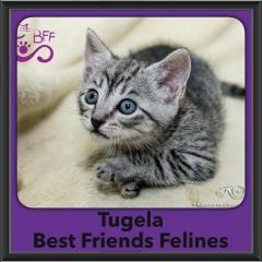 2016-Adopted-Tugela