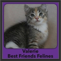 2016-Adopted-Valerie