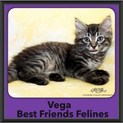 2016-Adopted-Vega