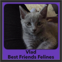 2016-Adopted-Vlad