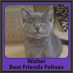 2016-Adopted-Walter