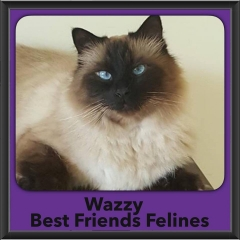 2016-Adopted-Wazzy