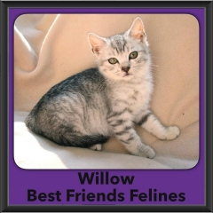 2016-Adopted-Willow