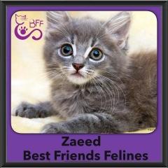 2016-Adopted-Zaeed